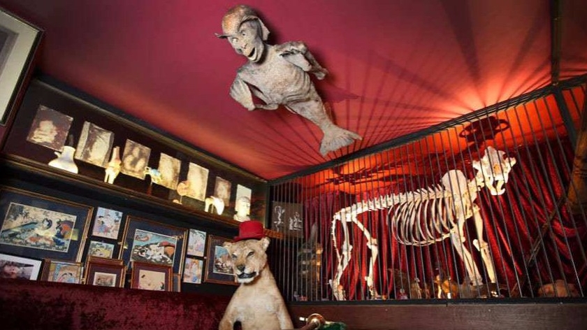 Viktor Wynd Museum ad Hackney, marman tiger's skeleton e lion
