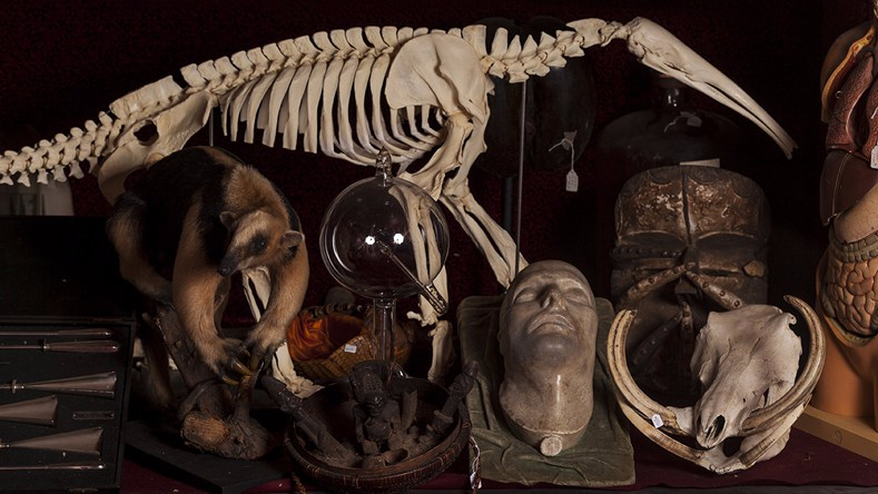 Viktor Wynd Museum  Of Curiosities, Fine Art And Natural History