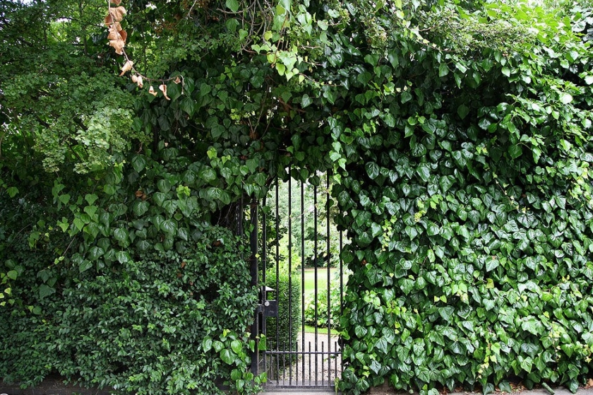 Notting Hill location Rosmead Gardens, Rosmead Road, London W11