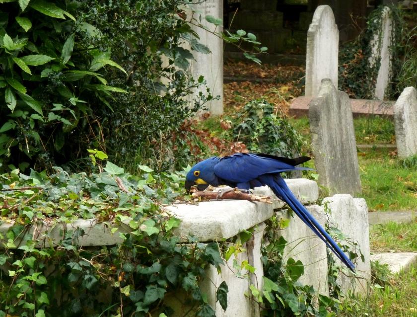 Brompton_Cemetery_-_Parrot_and_Gravestones.jpg